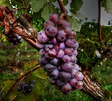 I Need A Big Squeeze ~ Grapes ~ by Charles & Patricia   Harkins ~ Picture Oregon