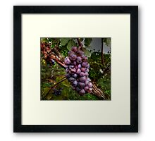 I Need A Big Squeeze ~ Grapes ~ Framed Print