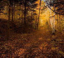 Autumn Woods by faczen
