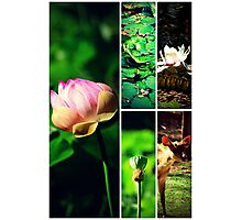 Pamplemousses Garden Collage Photographic Print