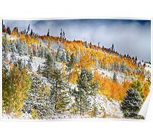 Colorado Rocky Mountain Snowy Autumn Colors Poster
