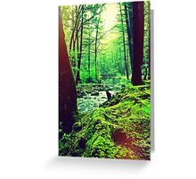 Peoples State Forest Riverton CT Greeting Card