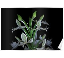 Orchid wings Poster