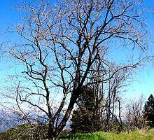 Tree by littyk