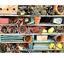 Heartbreak at the Insect Hotel.... Photographic Print