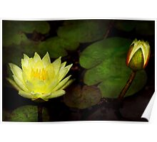 Flower - Lily - Morning showers  Poster