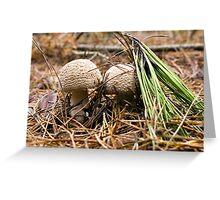 Fungi Hunt Greeting Card