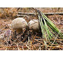 Fungi Hunt Photographic Print