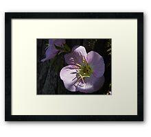 Primrose And Cypress Framed Print