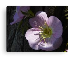Primrose And Cypress Canvas Print