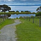 Churchill Island Lake Vic by PhotoJoJo