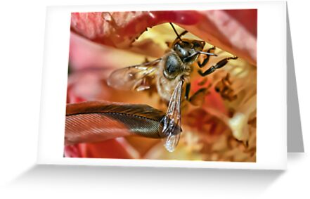 Please Bee Gentle by Kenneth Haley
