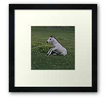 Getting up is hard work Framed Print