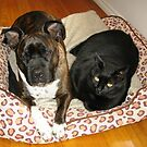 Roxy and Billy by dozzam
