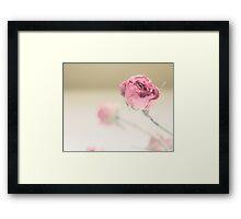 Dried Rose Framed Print