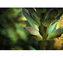 Shades of Green Photographic Print