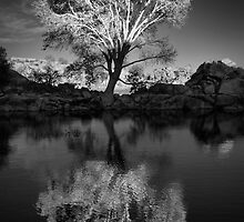 Zen Tree by Bob Larson
