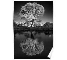 Zen Tree Poster