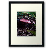 Toadstool (9602) Framed Print