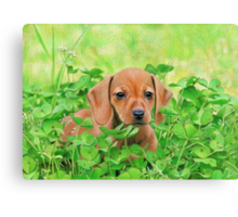 Jersey in the Clover Canvas Print