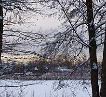 Through the Trees by Georgia Mizuleva
