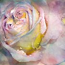 rainbow rose by Teresa Pople