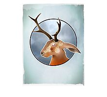 The Mythical Jackalope - Folk Lore ? Photographic Print