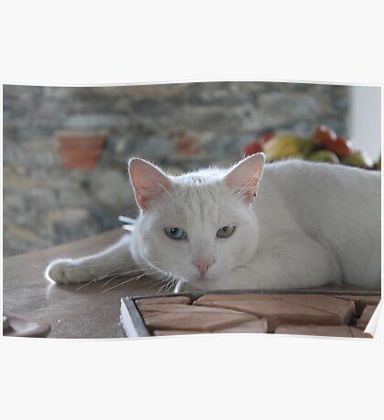 CAT Poster
