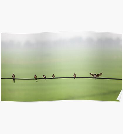 Birds on a Wire (2013) Poster