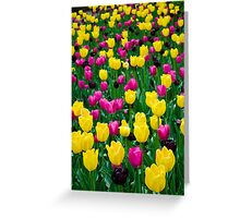 Tulips in Bloom Greeting Card