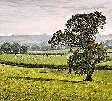 Cerne Valley by Geoff Carpenter