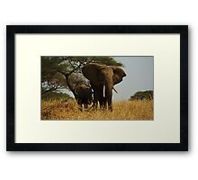 Mother and Child Elephants Framed Print