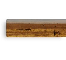 Safari Panorama Canvas Print