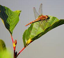 A Dragon on a leaf by bundug