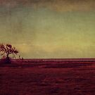 solitary  by Ingz