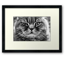 Don't mess with me Framed Print
