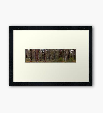 mundaring forest  Framed Print