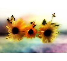 Sunflowers in harmony  Photographic Print