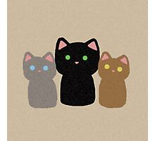 Three Curious Kittens Photographic Print