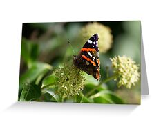 Red Admiral.. Greeting Card