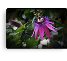 Passion In A Flower Canvas Print