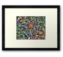 Amanita Muscaria Wild Mushroom Framed Print