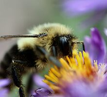 Funny Bumble Bee by Keala