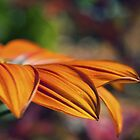 Orange Flower in the Garden by William Martin