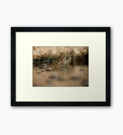 Chiricahua Leopard Frog ~ Gas Powered Framed Print