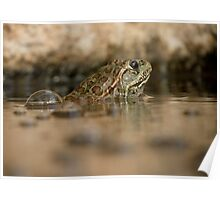 Chiricahua Leopard Frog ~ Gas Powered Poster