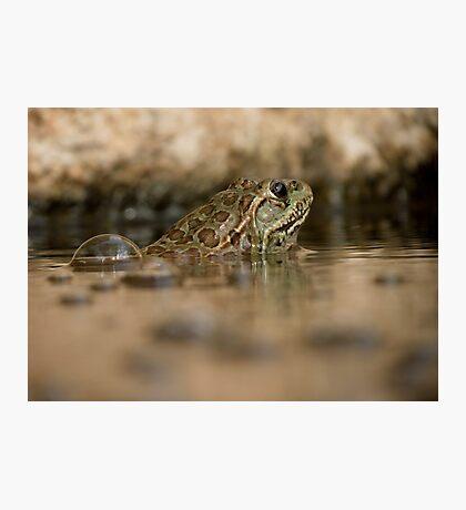 Chiricahua Leopard Frog ~ Gas Powered Photographic Print