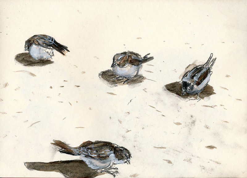 Sparrows by WoolleyWorld