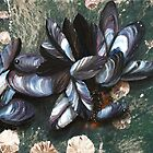 Mussels by Paulmayfield