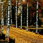 autumn churchyard walk by lukasdf